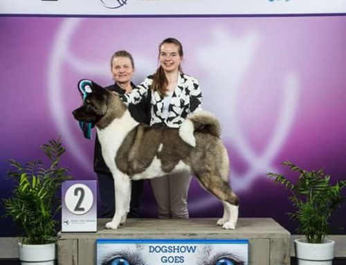 Dogshow Goes 15 en 16 april 2017